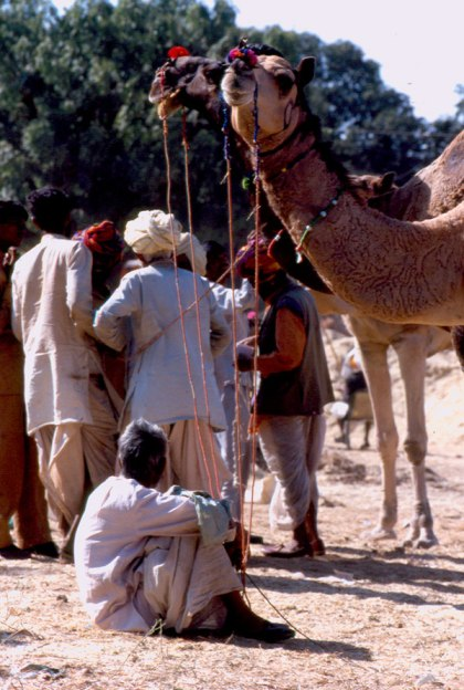 Negotiations at the Camel Fair
