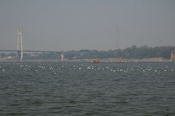 Boating in the Yamuna 5